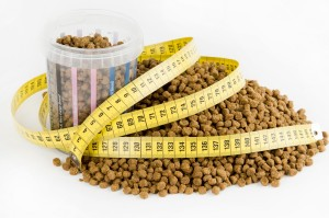 cat diet and nutrition